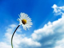 sunshine-freedom-flower-sky